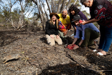 Numbats away: NSW Environment Minister, Matt Kean, (centre) releases a numbat into the Mallee Cliffs National Park's feral-free area. Barkindji Traditional Owners, Warren Clark, Betty Pearce and Kathy Potter, watch on, along with Tali Moyle, a wildlife ecologist (left).
