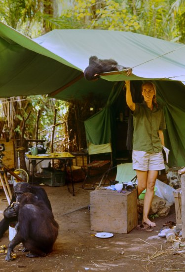 Flint peeks into a tent at Jane Goodall at her research camp in Gombe in the early 1960s.
