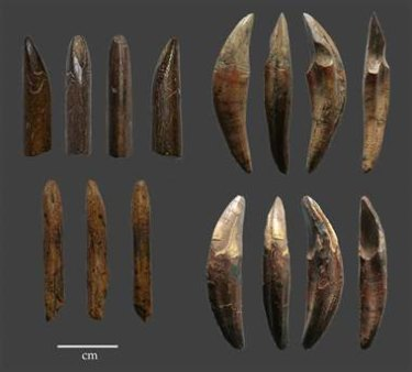 Example of tools manufactured from monkey bones and teeth recovered from the Late Pleistocene layers of Fa Hien Cave, Sri Lanka.