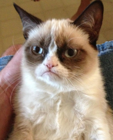 The first photo of Grumpy Cat posted online, which launched a thousand memes.