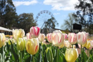 Canberra's spring display of flowers, Floriade, has been re-imagined for the coronavirus shutdown. It's one of the ways states and territories are trying to support their economies.