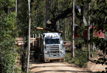 A logging truck is loaded up with timber in a region of the South Brooman State Forest.