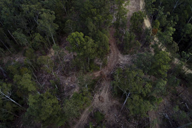 The Lower Bucca State Forest near Coffs Harbour. Forestry Corp has suspended logging in this region of NSW after last week's huge rainfall and subsequent floods.