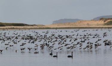 Lake Wollumboola near Culburra Beach. West Culburra is another development hotspot.