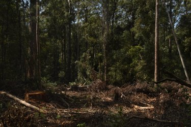 The big bushfires of 2019-20 has added to the pressure on timber supplies whether from state forests or private land.