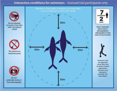 Swimmers are required not to approach within 30 metres of a humpback whale.