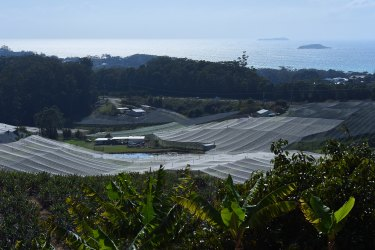 "The Kororo Nature Reserve, near Coffs Harbour, has become ""hemmed in"" by intensive horticulture, particularly blueberries, cutting it off from other ecosystems. In the background is the part of the Solitary Islands Marine Park."