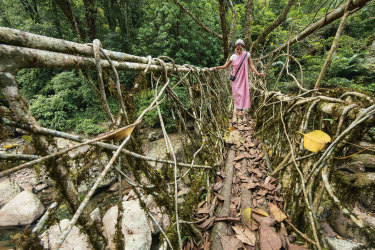 A living root bridge in India that minimises material use and environmental impact