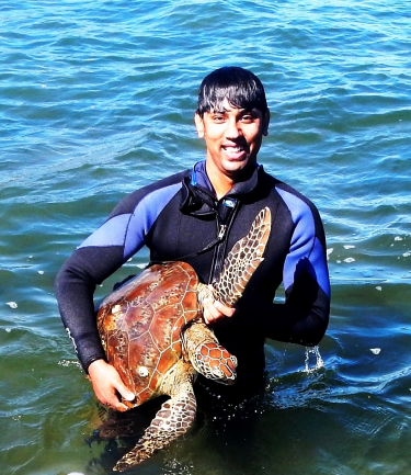 Microbiologist Shamim Ahasan has been testing green sea turtles for drug-resistant buggs.