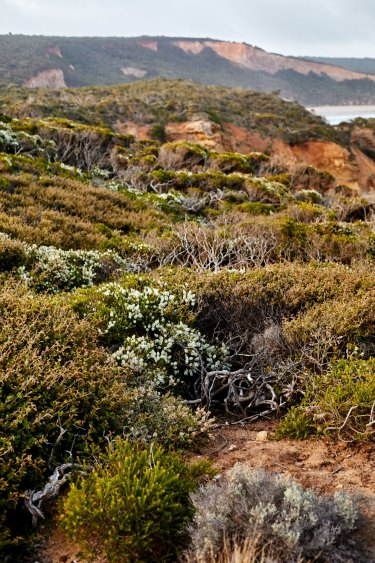 Native vegetation on the cliffs at Point Addis