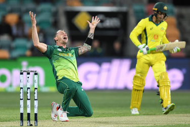South Africa's Dale Steyn after removing Australia's Alex Carey during a one-dayer in Hobart last year.