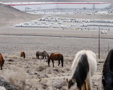 """Wild horses graze in the hills above Tesla's """"Gigafactory""""."""
