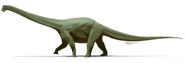 "Diamantinasaurus matildae is named after the nearby Diamantina River as well as ""Waltzing Matilda"" which is said to have been written in the area."