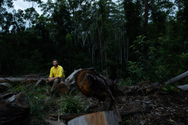 Dean Kearney, a senior planning manager for the state-owned Forestry Corporation, sits in an area of the Lower Bucca State Forest where logging has recently been conducted.