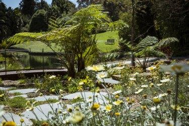 A golden-coloured sweep in the new Sensory Garden.