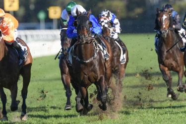 Loving it: Gaulois ploughs through the mud for Rachel King in the Civic Stakes.
