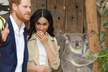 Harry and Meghan meet koalas at Taronga Zoo.