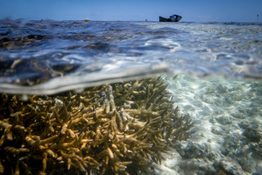 Bleaching of the Great Barrier Reef near Heron Island in 2016. Scientists say very little coral cover will remain even if global temperature increases are kept to even 1.5 degrees above pre-industrial times.