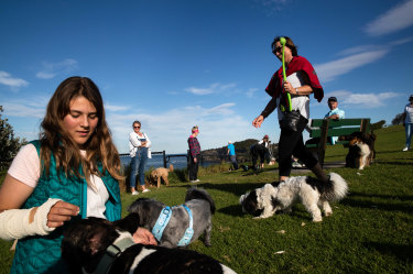Residents are divided over a proposal by Northern Beaches Council to create off-leash dog areas at Palm Beach and Mona Vale Beach.