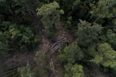 A drone image showing pockets of logged woodland within the Lower Bucca State Forest.