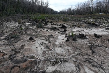Conservations worry that plans for more coal mining in the area could lead to further destruction of endangered shrub swamps, such as at Carne West.