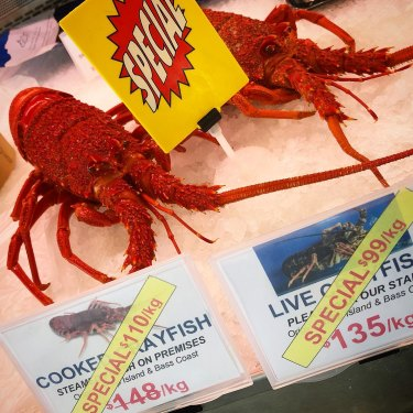 Crayfish prices fall as fishers get caught with their catches.