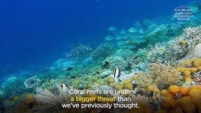 Marine heatwave risk to Great Barrier Reef
