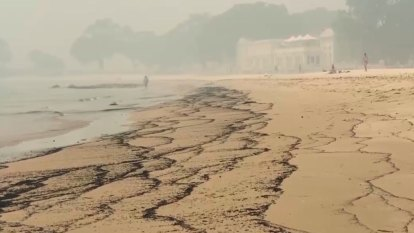 Ash from NSW bushfires washes up on Sydney Beach