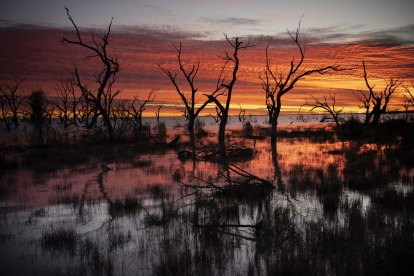 'Fish don't respect borders': Move to bolster Menindee Lakes reserves