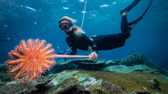 'On the nose': Saving the Great Barrier Reef at the top of Australians' priorities