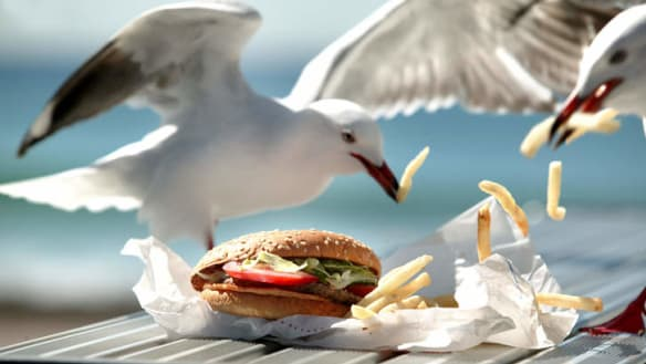 Perth restaurant arms patrons with pistols in battle against seagulls