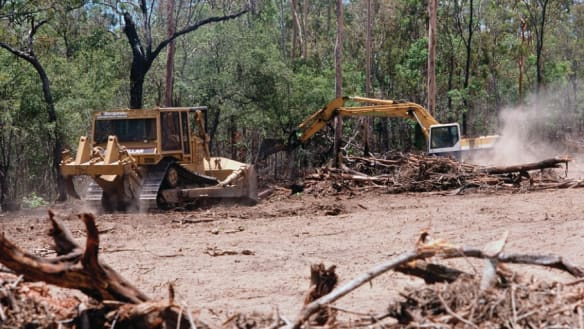 Queensland accounts for up to 65 per cent of tree clearing: report