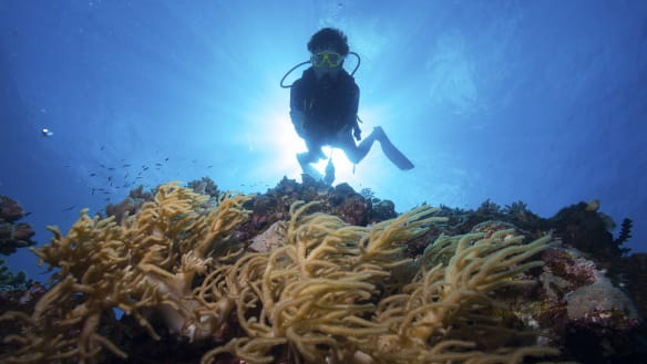Extra $40 million in Great Barrier Reef funding in next month's budget