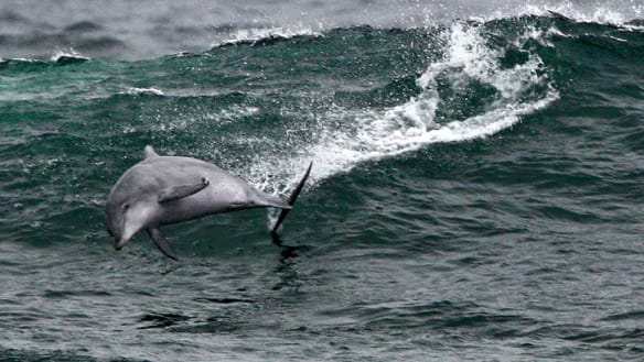 Collateral damage too brutal from NSW shark nets