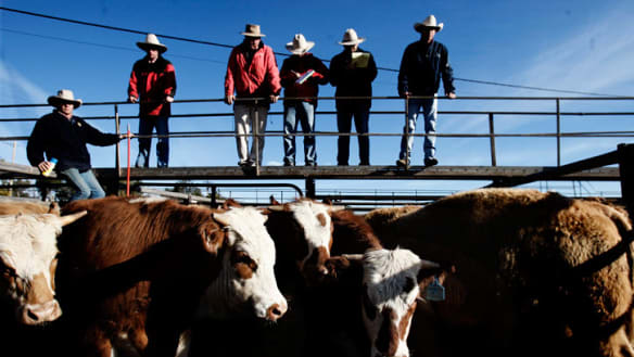 Semen auction to help fund farmers' fight against new laws