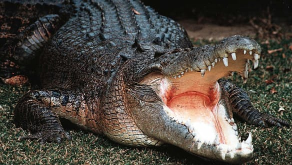 'You won't come out alive': Katter crocodile plan resurfaces