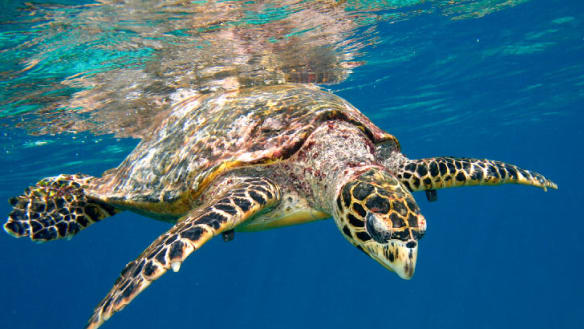 Government winds back marine protections to support fishing industry