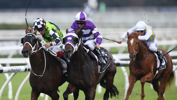 Waller emerges with pair of Derby hopes from Packer Plate photo finish