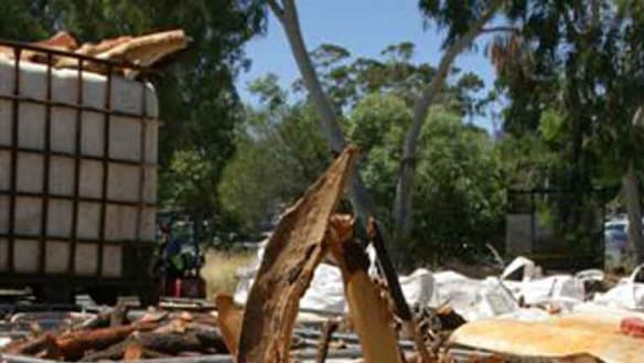 Perth businessman jailed over stolen sandalwood