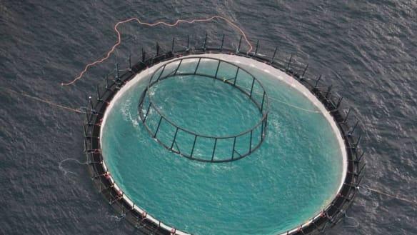 Port Stephens feeding frenzy: 'I've never seen so many sharks in my life'