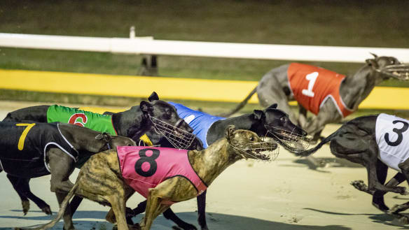 NSW greyhound trainers feel sorry for ACT rivals ahead of Canberra Cup