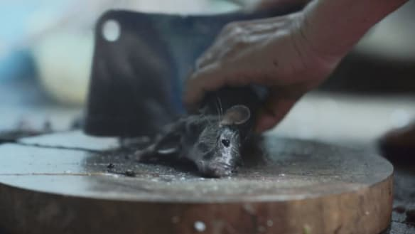 Live rats torn apart not 'high impact violence': Classifications watchdog