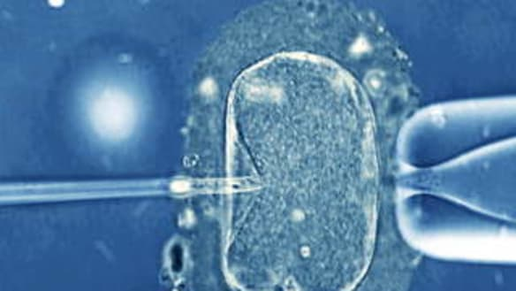 The research that could finally improve IVF's success rate
