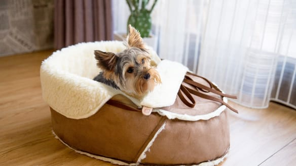 Furry members of the family will no longer need to steal their owners' shoes, as they will have their own to play with and sleep in.