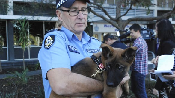 Meet WA Police's newest 12-week-old recruits: Maverick, Goose and Jester