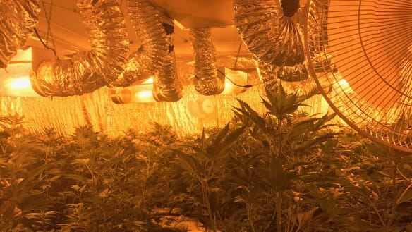 Police uncover 'entire house' converted to grow cannabis in WA's South West