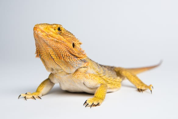 Reflections: warming to a cold-blooded pet isn't as hard as you think