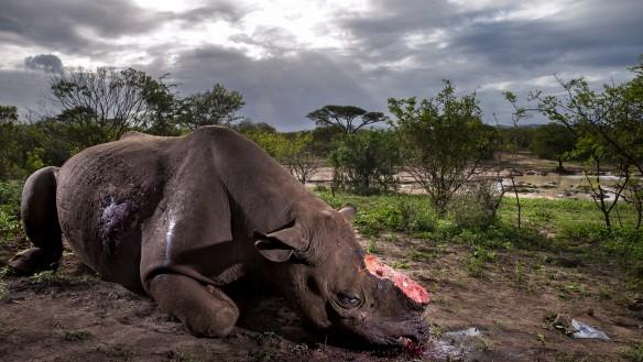 Photographer wins award for photo essay highlighting the deadly rhino horn trade