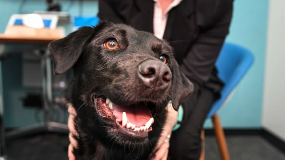 Coop is an emotional rescue dog for those who face court ordeal