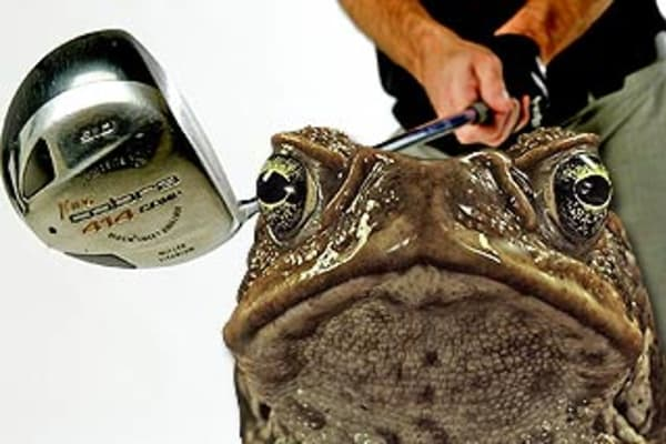 I have frozen my last toad